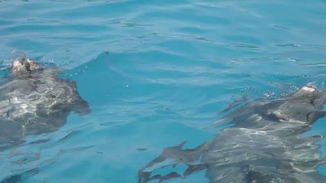 Dolphin-08