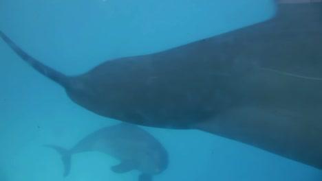 Dolphin-17