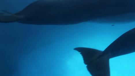 Dolphin-20