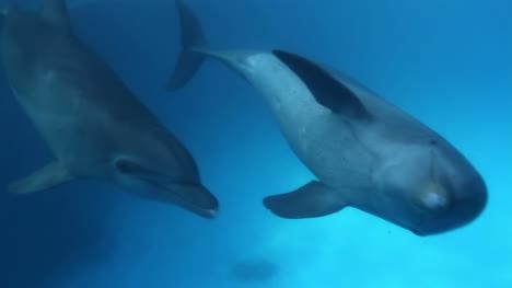 Dolphin-21