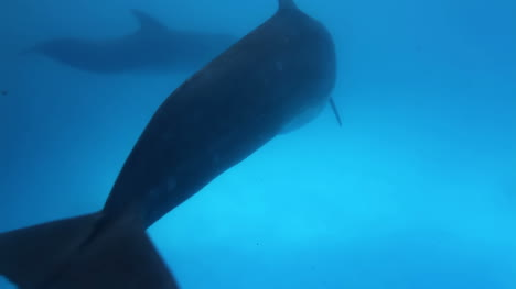 Dolphin-22