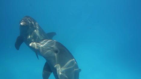Dolphin-26