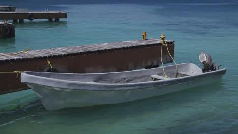 Dolphin-Boat-00