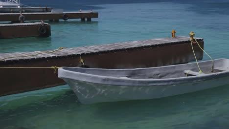 Dolphin-Boat-02