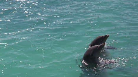 Dolphins-332