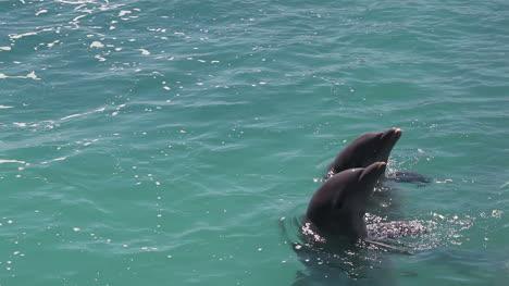 Delfines-332