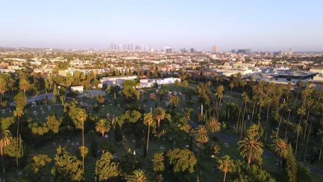 An-Excellent-Vista-Aérea-Shot-Of-Palm-Trees-In-A-Cemetery-In-Los-Angeles-California