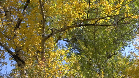The-Wind-Rustles-The-Fall-Leaves