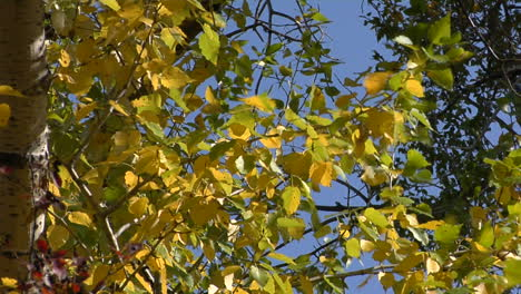 The-Wind-Rustles-The-Fall-Leaves-1