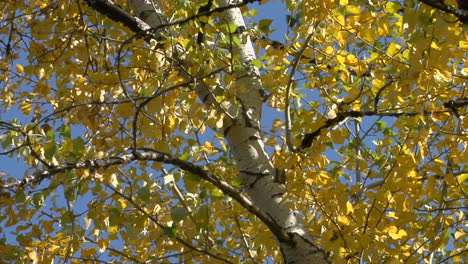 The-Wind-Rustles-The-Fall-Leaves-3