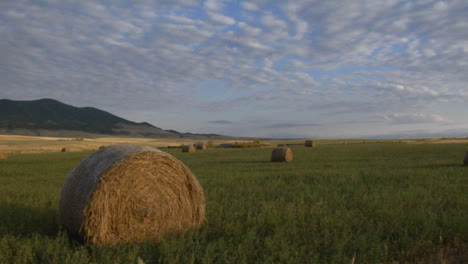 Bales-Of-Hay-Sit-In-Green-Fields-On-A-Prairie-Farm