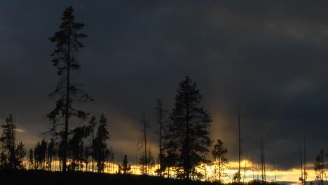 Trees-That-Survived-A-Forest-In-Yellowstone-National-Park-Stand-In-Silhouette