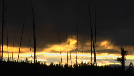 Trees-That-Survived-A-Forest-In-Yellowstone-National-Park-Stand-In-Silhouette-1