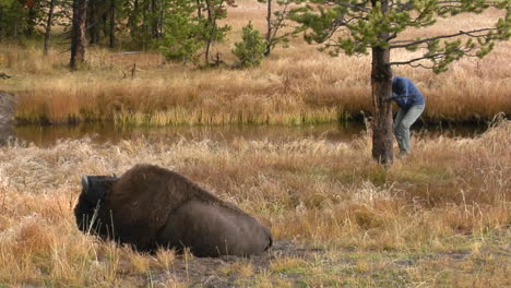 A-Man-Photographs-A-Bison-At-Yellowstone-National-Park-1