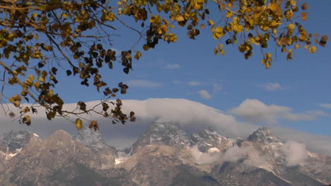 Autumn-Leaves-Rustle-In-The-Breeze-With-Cloud-Capped-Grand-Tetons-Set-Against-A-Blue-Sky
