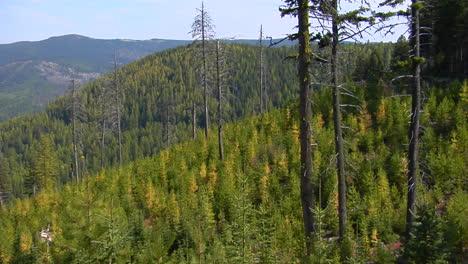 Immergrüne-Bäume-Wachsen-In-Einem-Sich-Erholenden-Wald