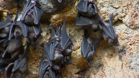 Bats-Hang-On-A-Wall-At-The-Pura-Goa-Lawah-Temple-Or-Bat-Cave-Temple-In-Indonesia