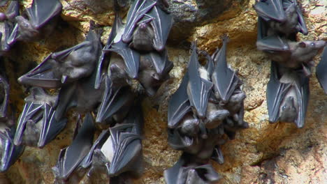 Bats-Hang-On-A-Wall-At-The-Pura-Goa-Lawah-Temple-In-Indonesia-1