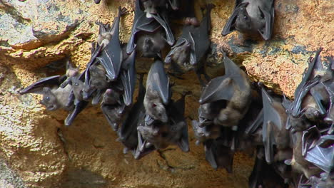 A-Groups-Of-Bats-Hang-On-A-Wall-At-The-Pura-Goa-Lawah-Temple-Or-The-Bat-Cave-Temple-In-Indonesia