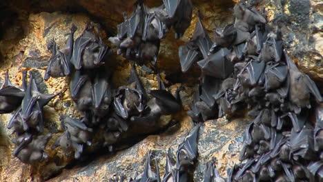 Grupos-De-Murciélagos-Cuelgan-De-Una-Pared-En-El-Templo-Pura-Goa-Lawah-O-El-Templo-De-La-Cueva-De-Murciélagos-En-Indonesia