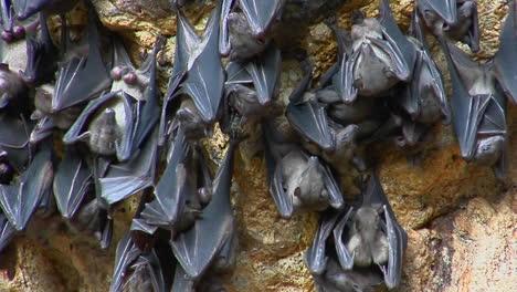 Los-Murciélagos-Cuelgan-De-Una-Pared-En-El-Templo-Pura-Goa-Lawah-O-El-Templo-De-La-Cueva-De-Murciélagos-En-Indonesia