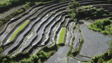 People-Work-In-A-Terraced-Rice-Field