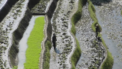 People-Work-In-A-Terraced-Rice-Field-1