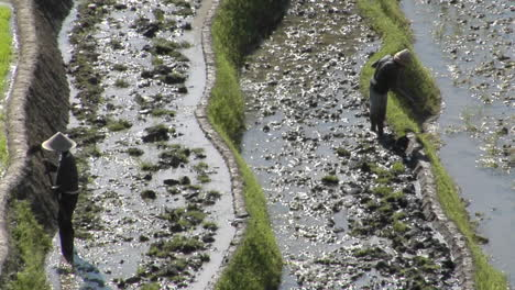 Farmers-Work-In-Terraced-Rice-Field