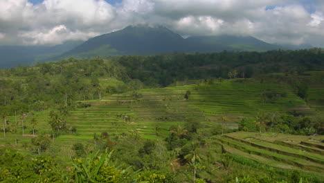 A-Terraced-Rice-Farm-Grows-Green-Fields-2