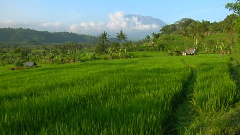 A-Terraced-Rice-Farm-Grows-Green-Fields-6