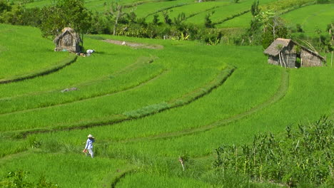 People-Work-In-A-Lush-Terraced-Rice-Field