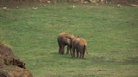 Elephant-00