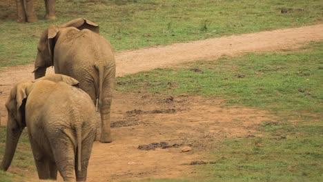 Elephant-03