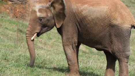 Elephant-08