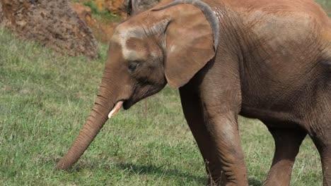 Elephant-09