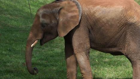 Elephant-12
