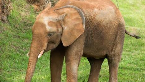 Elephant-13