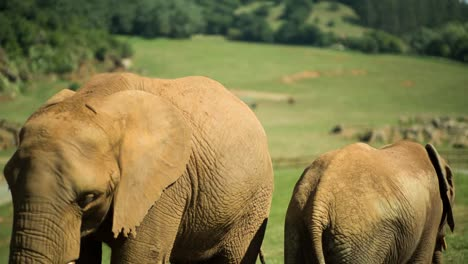 Elephant-15