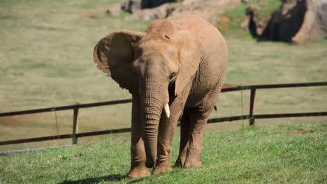 Elephant-16