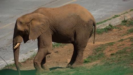 Elephant-18