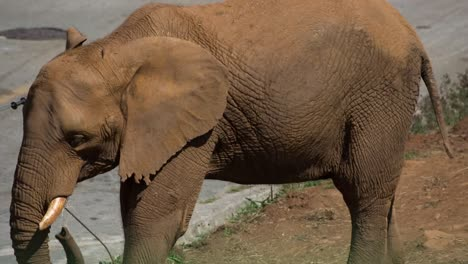 Elephant-19
