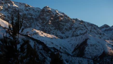 Fir-Mountain-00