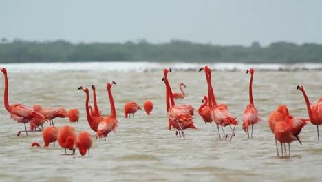 Flamingo-02