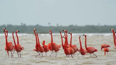 Flamingo-03