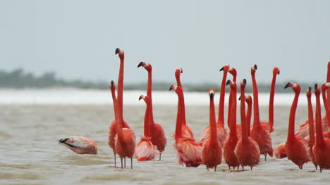 Flamingo-04