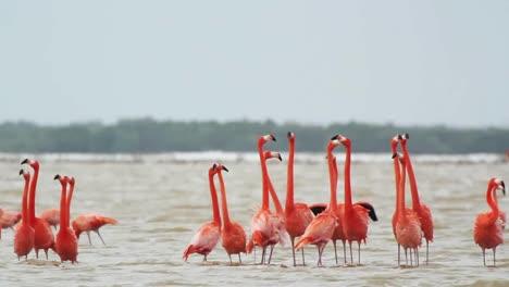 Flamingo-07