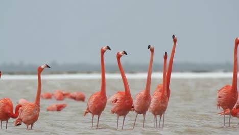 Flamingo-15