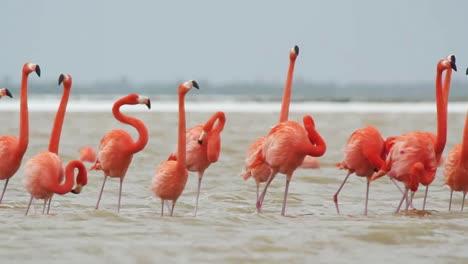 Flamingo-16