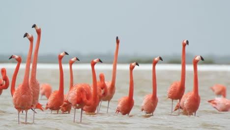 Flamingo-17