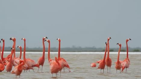 Flamingo-18
